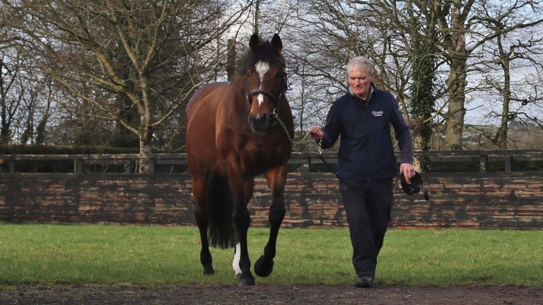 Galileo: proved he was the daddy once again at Newmarket