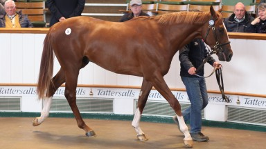 Lot 26 by Intello consigned by Grove Stud raised 575,000gns from John Ferguson
