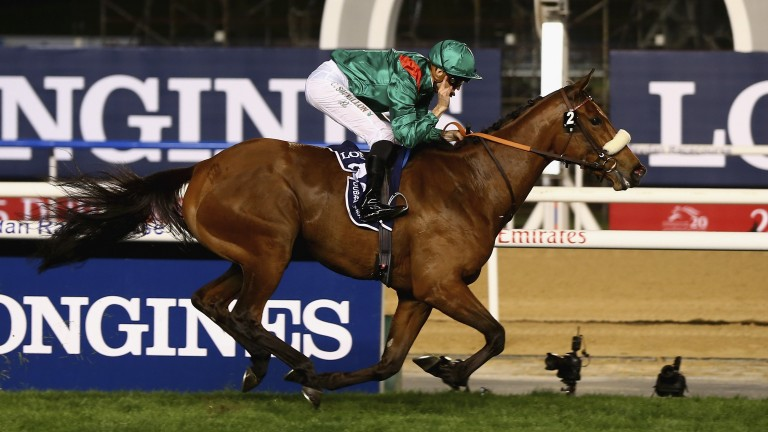 Dolniya: wins the 2015 Dubai Sheema Classic at Meydan