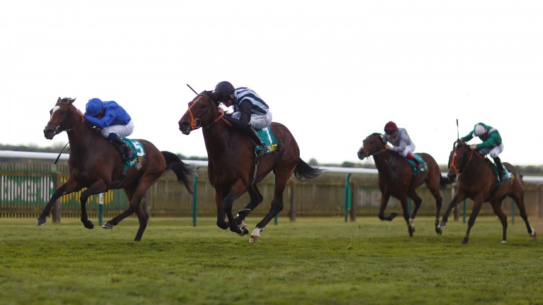 Tight call: 10-1 winner Steel Of Madrid (right) and Folkswood fight out the finish of a thrilling Earl of Sefton Stakes