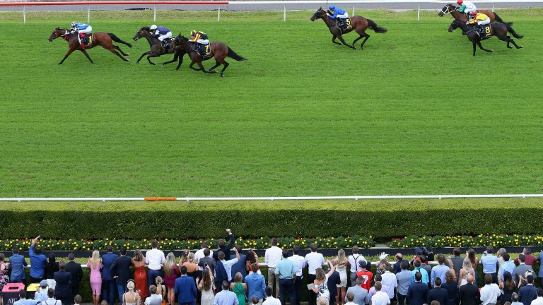 Big Duke won the Chairman's Handicap at Randwick last time and is favourite for the re-run of the Sydney Cup on Saturday