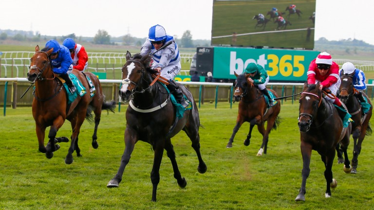 bet365 Craven Stakes: Eminent is much too strong for Rivet (right) and Benbatl (left)