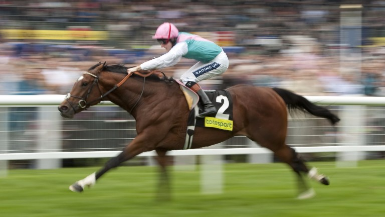 Frankel: has made a tremendous start to his stud career