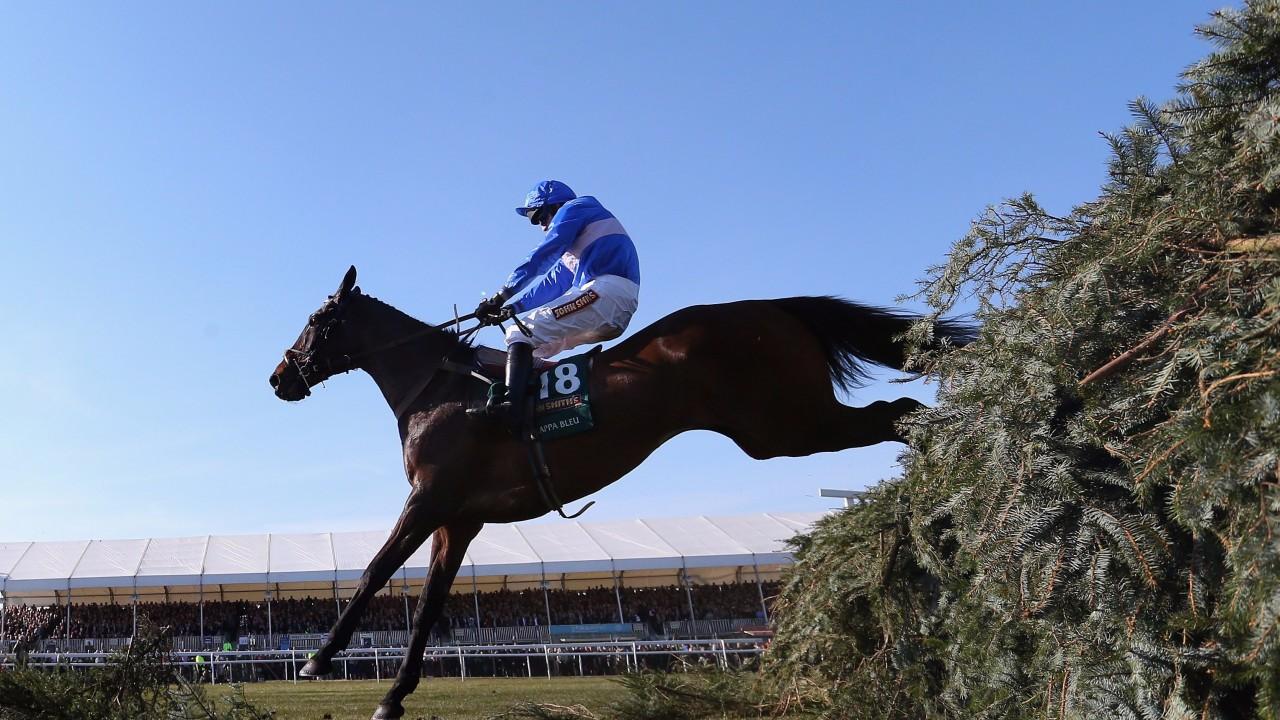 Cappa bleu oddschecker betting usa betting horse racing