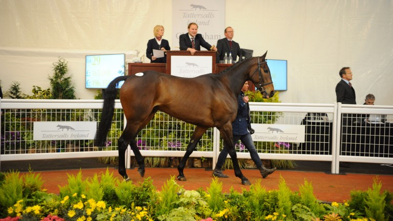 Global Citizen, an impressive winner between the flags at Bellurgan Park, goes under the hammer at Cheltenham