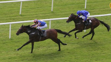 CURRAGH SAT 20 AUGUST 2016 PICTURE: CAROLINE NORRIS   ORDER OF ST GEORGE RIDDEN BY DONNACHA O'BRIEN WINNING THE PALMERSTOWN HOUSE ESTATE IRISH ST LEGER TRIAL STAKES FROM TWILIGHT PAYMENT RIDDEN BY KEVIN MANNING, 2ND.