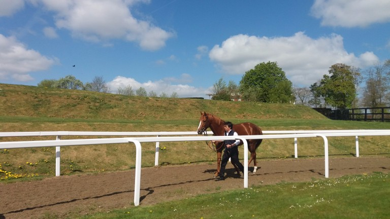 Stormy Antarctic parades at Ed Walker's owners' day