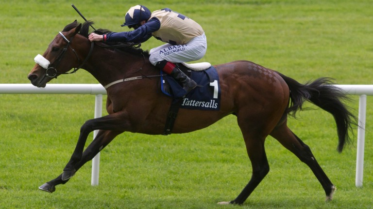 Fascinating Rock: won the Champion Stakes and Tattersalls Gold Cup