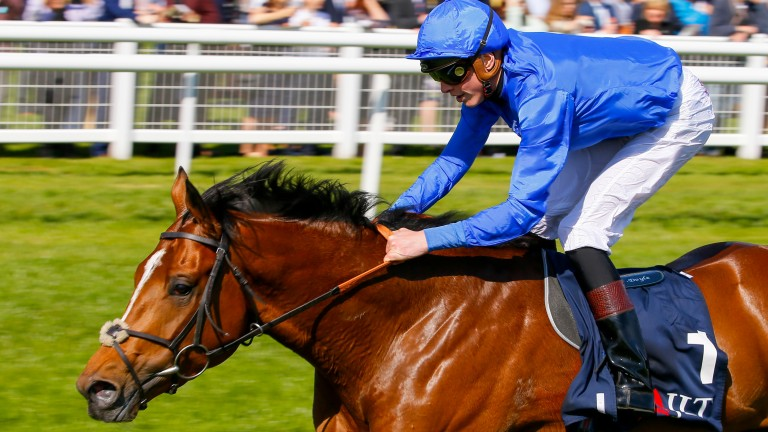 Barney Roy: first-crop son of Excelebration was bred by emerging global force Sun Stud