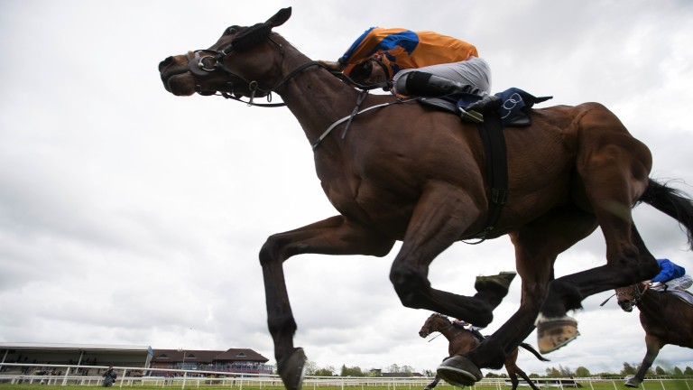 Colours famed in the southern hemisphere were carried to success by Torcedor at Navan on Sunday