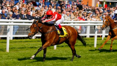 Dabyah: the John Gosden-trained filly can fly the flag for Sepoy in 2017