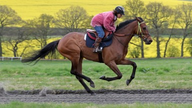 21.04.2017Coneygree, working on The Whatcombe Gallops, with Sarah Bradstock riding.PIC: Matthew Webb