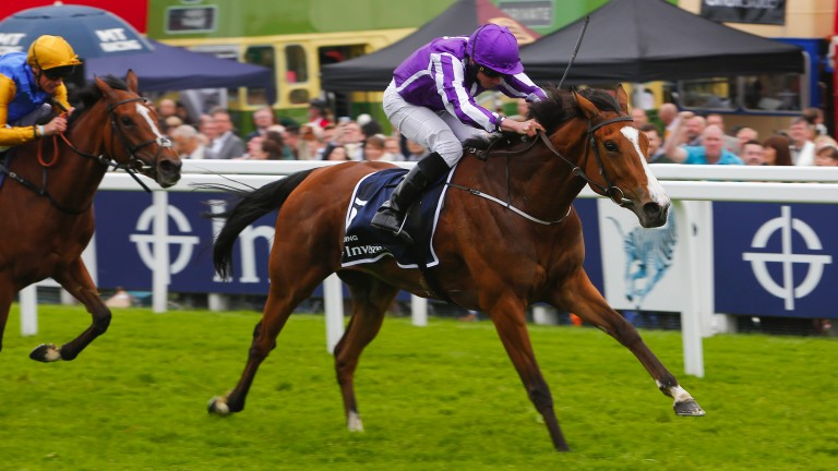 Minding: brilliant filly's little sister Conquest makes her debut tonight