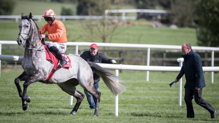 Pull the other one: Labaik isn't falling for Jack Kennedy's efforts at Punchestown - the grey did the same at Laytown back in 2016