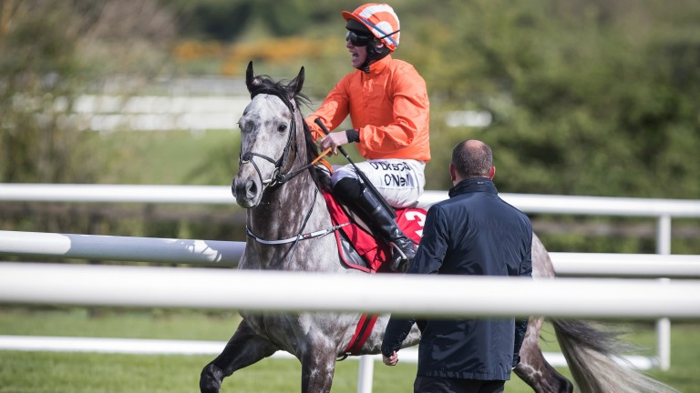 Bad behaviour: the quirky Labaik plants himself at the start of the Champion Novice Hurdle