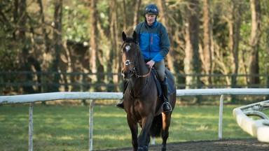 Swiss Storm - misses 2,000 Guineas