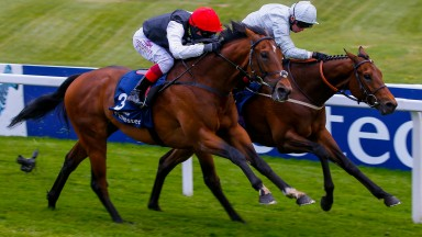 Cracksman and Frankie Dettori (nearside) get the better of Permian in the Investec Derby Trial