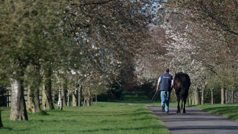 The National Stud: generated revenue of £2.5 million in 2016