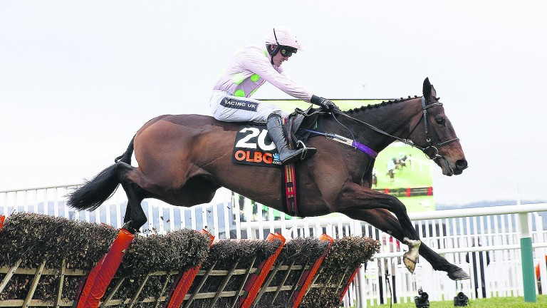 Vroum Vroum Mag: bidding to capture the Punchestown Champion Hurdle for the second year running