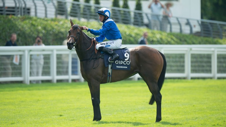 Taghrooda: exceptional mare was sadly barren to Muhaarar last year