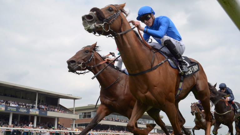 Home Of The Brave (blue): aiming to win the Leicester feature for the second year