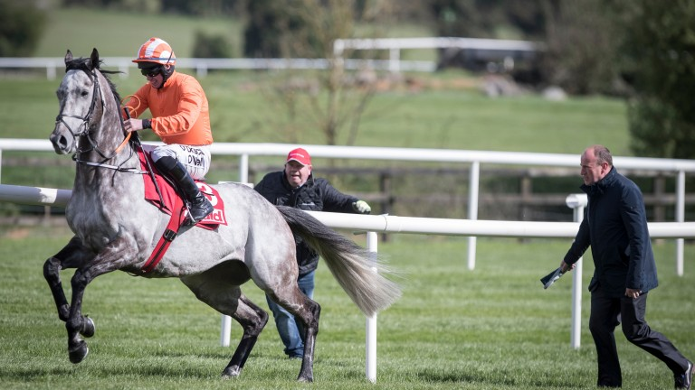 Labaik: the quirky gelding was up to his old tricks at Punchestown