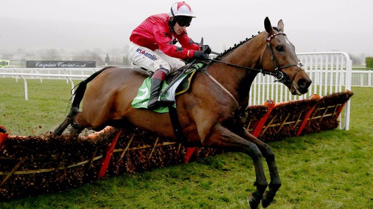 The New One: two and a half miles at Cheltenham are arguably his optimum conditions