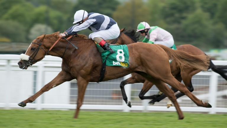 Ulysses, a son of Galileo, lands the Gordon Richards Stakes from another of the stallion's sons, Deauville