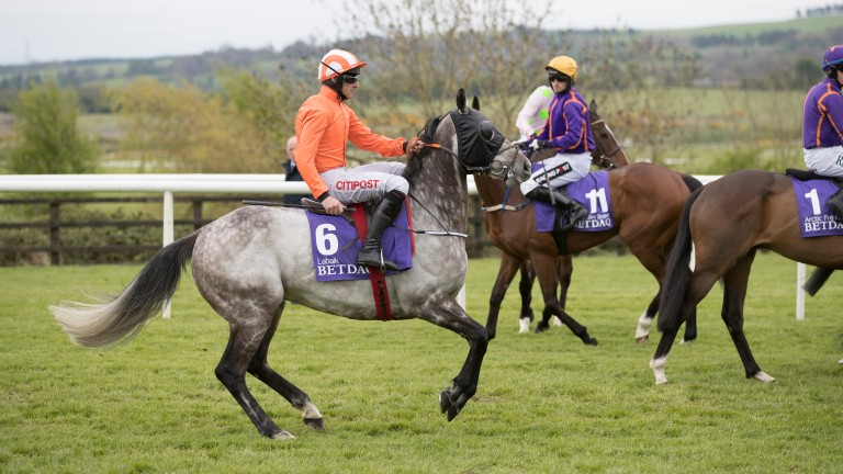 Nervous moments: Labaik at the start before finishing fourth in the Betdaq Champion Hurdle