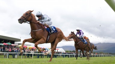Hailstone, seen here at Killarney last year, completed the double at Limerick for Dylan Hogan