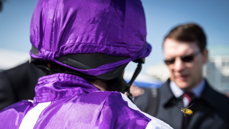 There was no sting in the tail for Minding after her easy victory, but the same may not have been true for Ryan Moore with a wasp about to alight on his shoulder