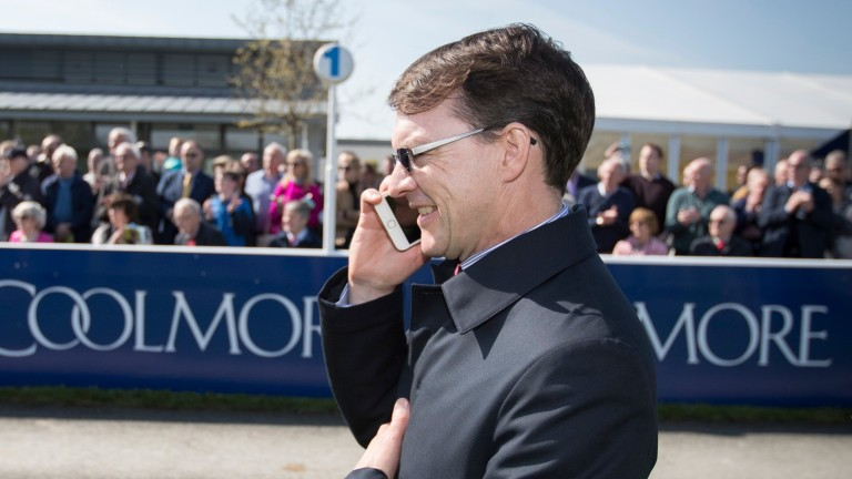 Aidan O'Brien: won the Derrinstown Stud Derby Trial for the 11th time