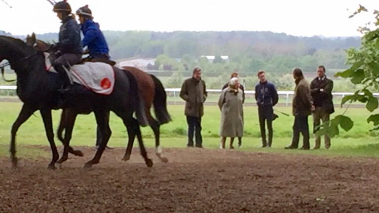The Queen chats to Pat Cosgrave and William Haggas after watching the work on the Newmarket gallops