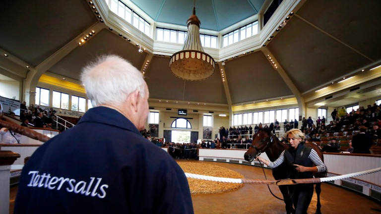 Tattersalls: 307 lots of breezers and horses in training are catalogued to come under the hammer