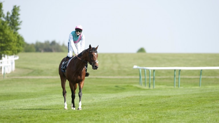 Job done: Frankel and Tom Queally walking back