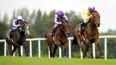 Sea The Stars: set the summer of 2009 alight with a string of Group 1 wins