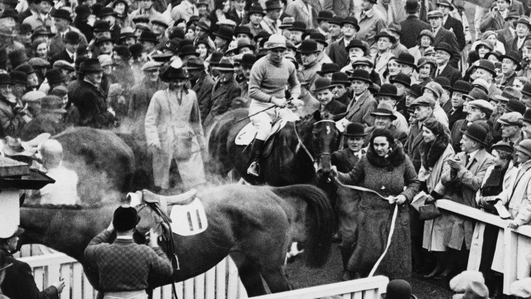 Golden Miller is led into the Cheltenham winner's enclosure by his owner Dorothy Paget
