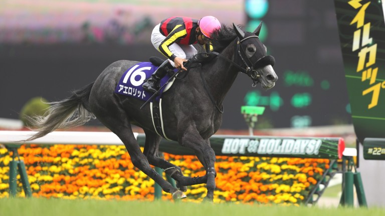 Aerolithe picks up impressively for Norihiro Yokoyama
