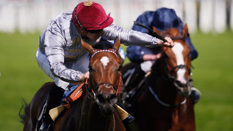 Qemah is entered in the Queen Anne Stakes and the Duke of Cambridge Stakes at Ascot
