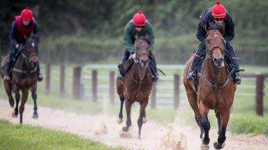 Red Label and Warren O'Connor on the gallops at Commonstown Stables