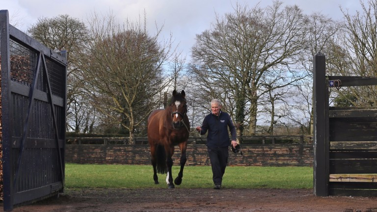Galileo: Coolmore's perennial champion sire has dozens of well-bred runners in the pipeline