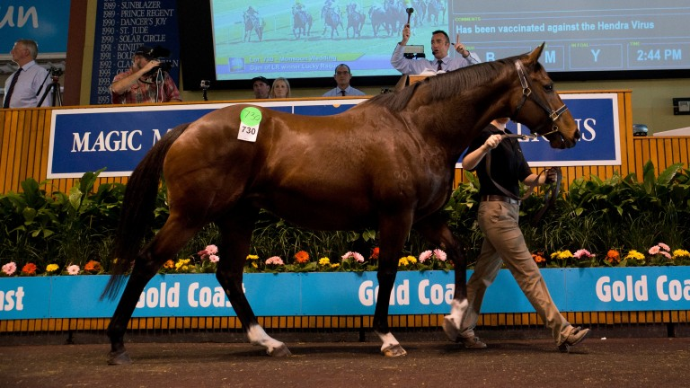 Monsoon Wedding: sells in foal to Pierro as part of the Teeley dispersal for A$2.3 million