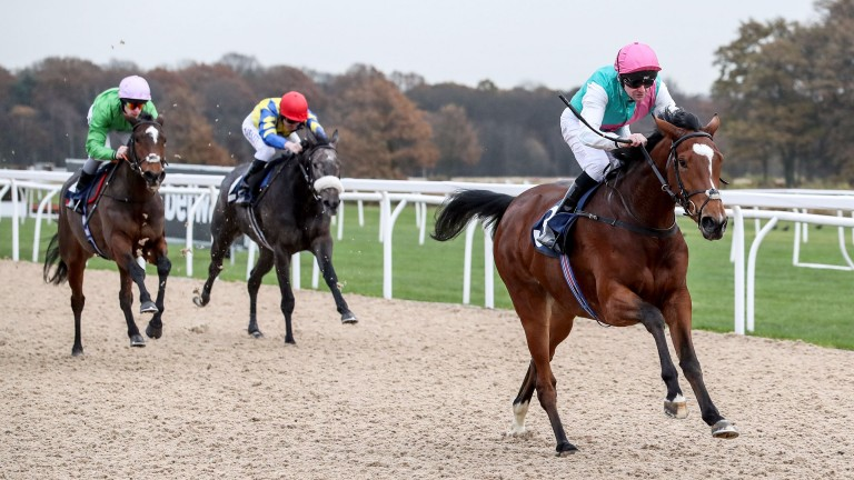 Enable: won on the all-weather at Newcastle last winter