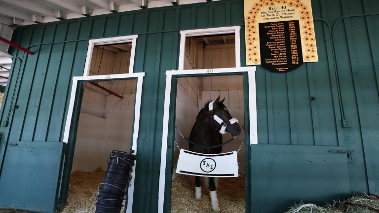 Always Dreaming looks out from the stall reserved for the Kentucky Derby winner at Pimlico, where he will bid for the Preakness Stakes on Saturday