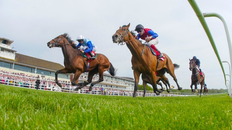 Carntop (nearside) finished second in last years Lingfield Derby Trial