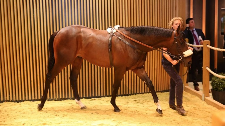 The Street Sense colt who sold for €1.4 million at Arqana on Friday