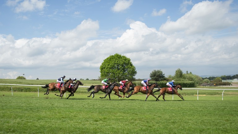 Hertford Dancer (third) races down the hill on the way to Oaks Trial success