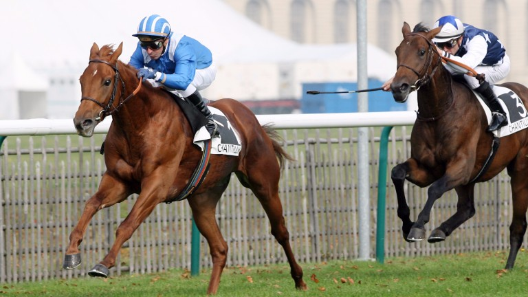 Tamayuz, now a Classic sire, is from the family of Galileo