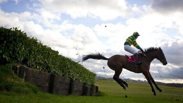 Auvergnat: ran fourth in the Cross Country Chase at the Cheltenham Festival