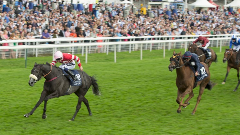 Acapulco: pictured finishing second behind Mecca's Angel in the 2015 Nunthorpe